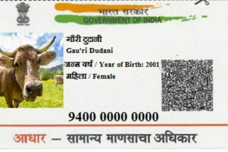aadhar-card-cow
